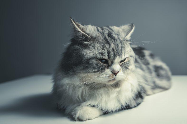 adorable-animal-cat-290263